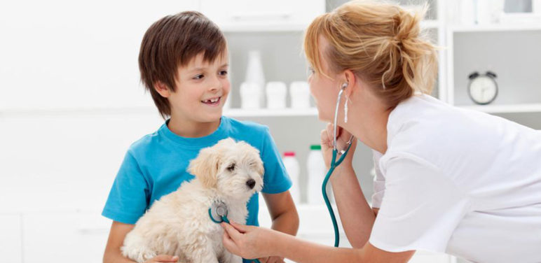 Factors that can affect the cost of pet care