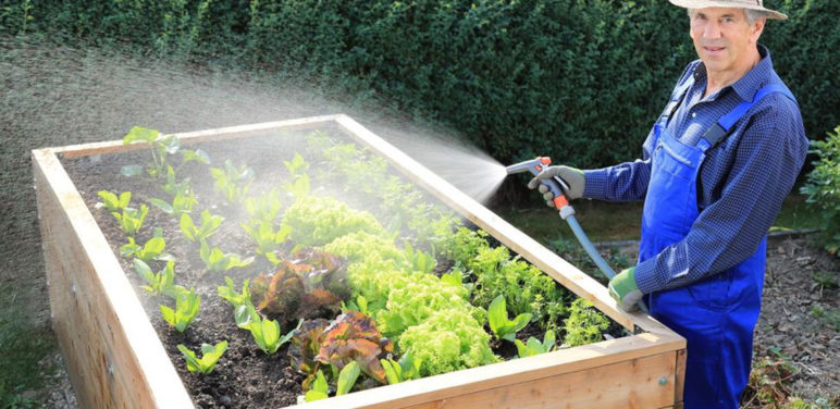 Four smart tips that every newbie gardener should know