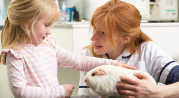 Top pet insurance policies that you can choose from