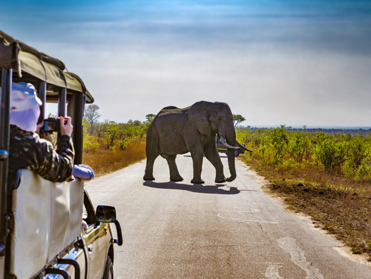 Selecting the Right Travel Package for Africa