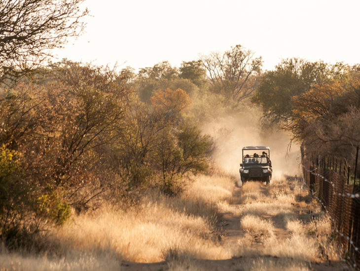 Tips for a Budgeted South Africa Safari Tour