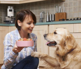 Best Treatments and Foods for Dog Allergies