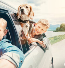 All You Need to Know About Traveling With Pets
