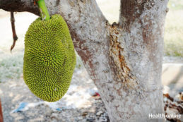 Jackfruit Nutritional Facts & Benefits