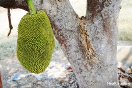 Jackfruit Nutritional Facts & Benefits