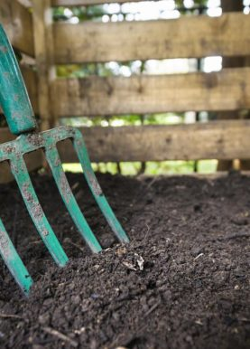 5 Reasons Why You Need a Compost Caddy
