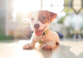 The-Benefits-of-Buying-Pet-Products-Online